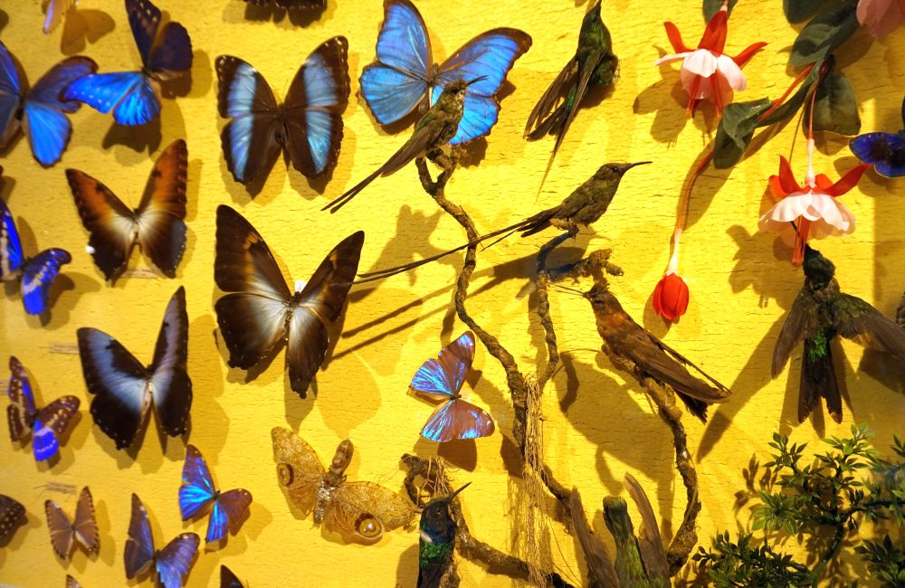 Naturmuseum 10