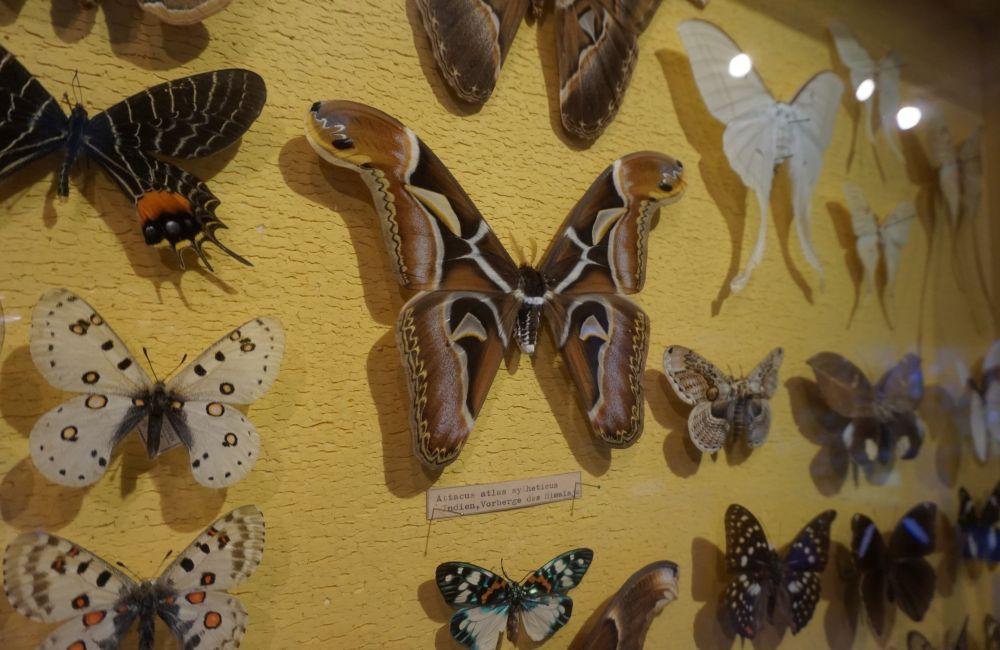 Naturmuseum 11