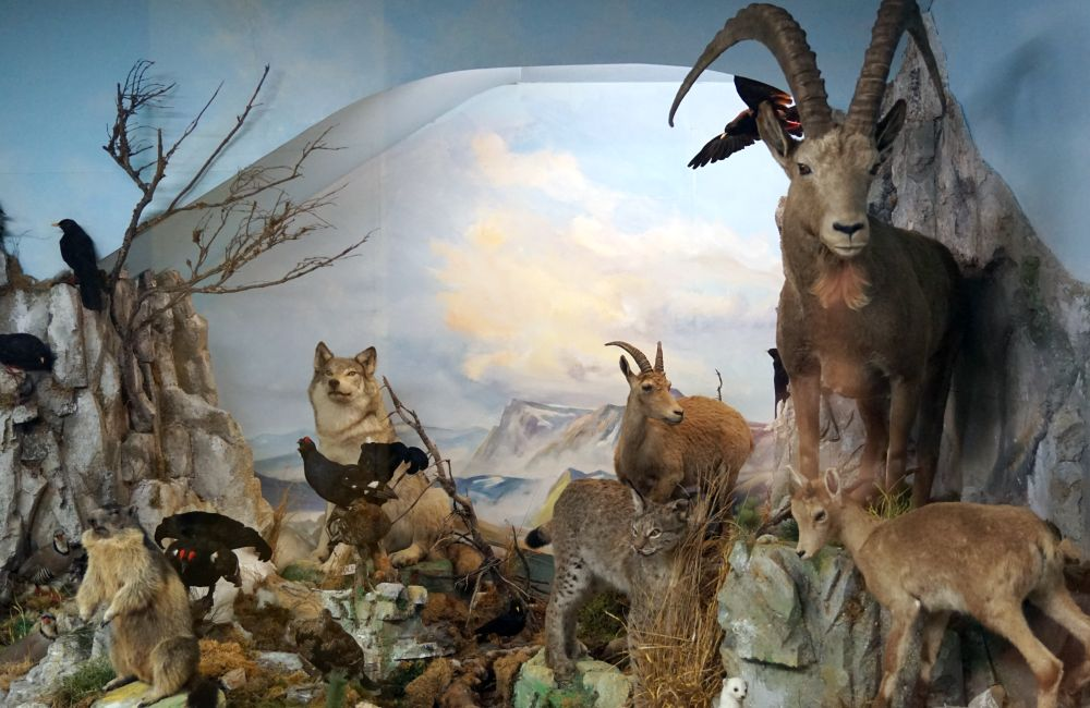 Naturmuseum 12