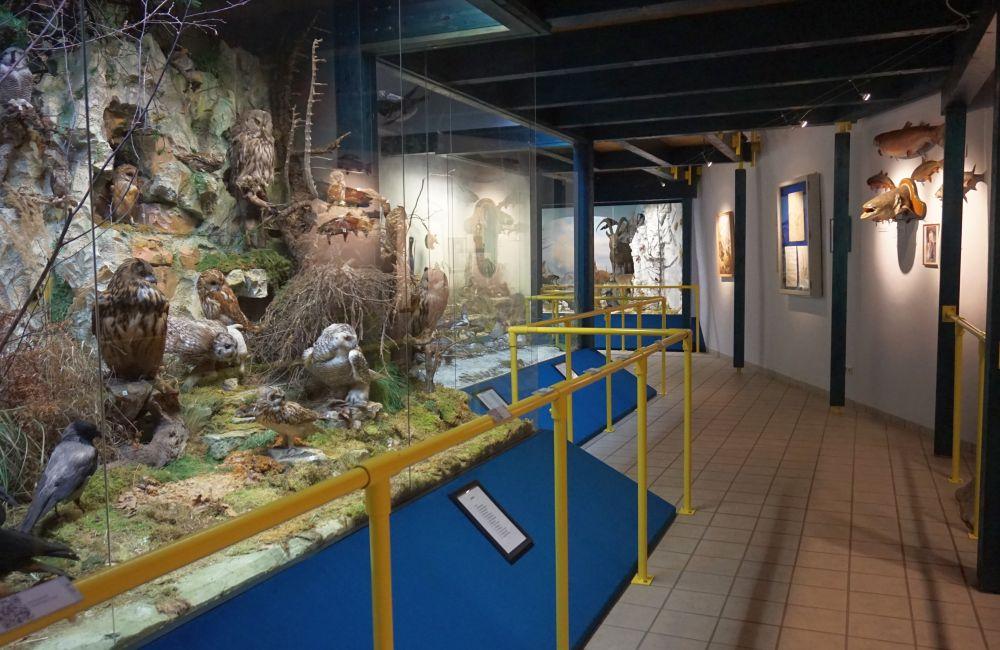 Naturmuseum 4