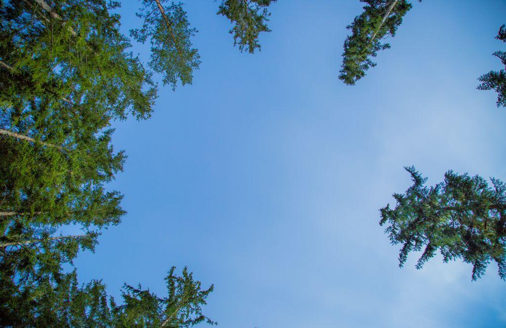 Wald Der Sinne 6