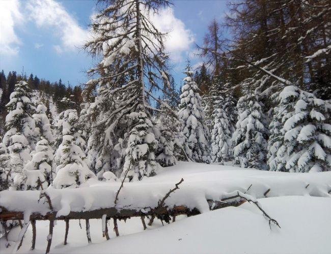 Schneeschuhspaziergang zum Nikolokreuz