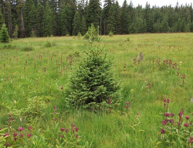 Aufladung Biodiversität